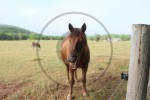 carte postale cheval